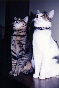 1997_s.jpg