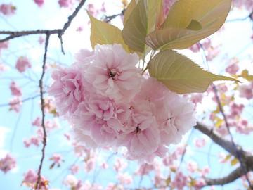 2016-04-29_14-03-22_s.jpg