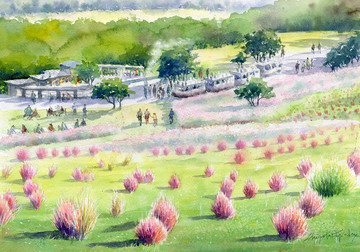 hill_blooming_kokia_s.jpg