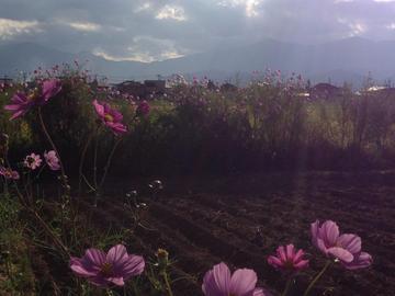 takiuchi_cosmos1.jpg